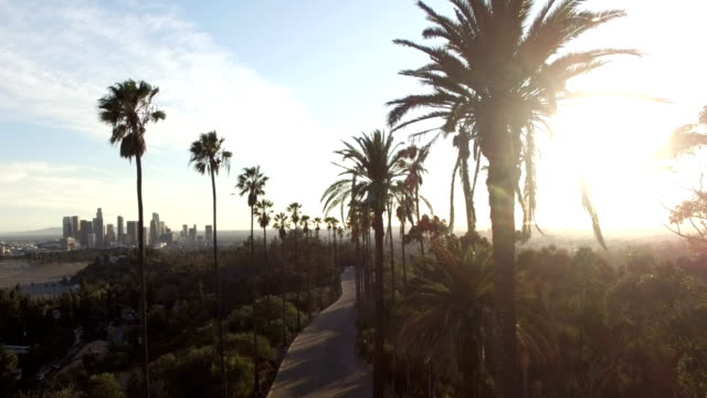 Drone view through tall palm trees to downtown Los Angeles video