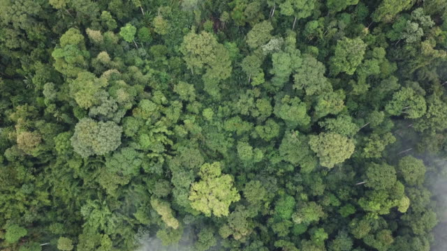 drone view tropical forest morning cameron highland