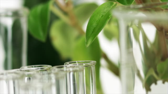 A drop dripping from green leaf into test tube | Natural cosmetics video