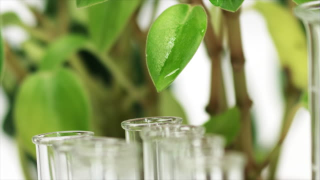 A drop dripping from green leaf into test tube | Organic cosmetics video