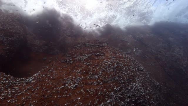 vídeos de stock e filmes b-roll de drop off reef underwater in pacific ocean. - oceano pacífico
