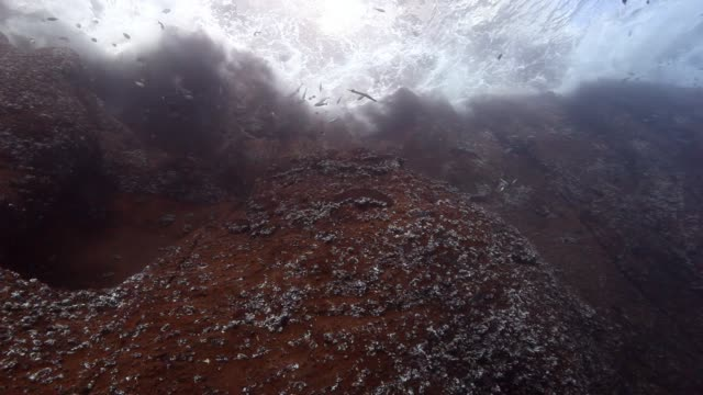 drop off reef underwater in pacific ocean. - ocean spokojny filmów i materiałów b-roll