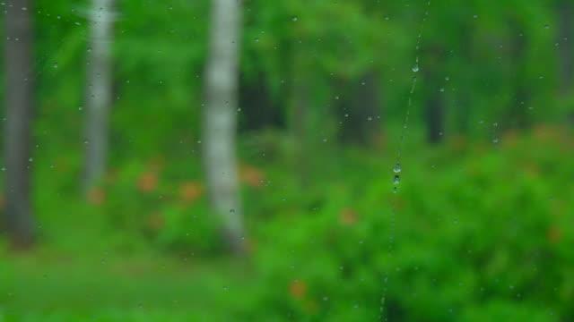 Droplet in Car Window video