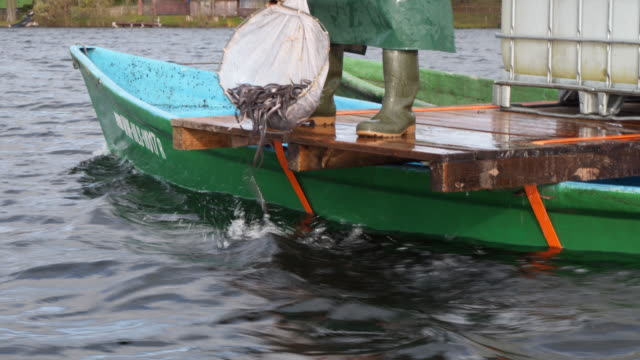 dropping small eels into the lake - siluriformes video stock e b–roll