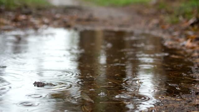 vídeos de stock e filmes b-roll de gotas de chuva está caindo na superfície de água. - poça