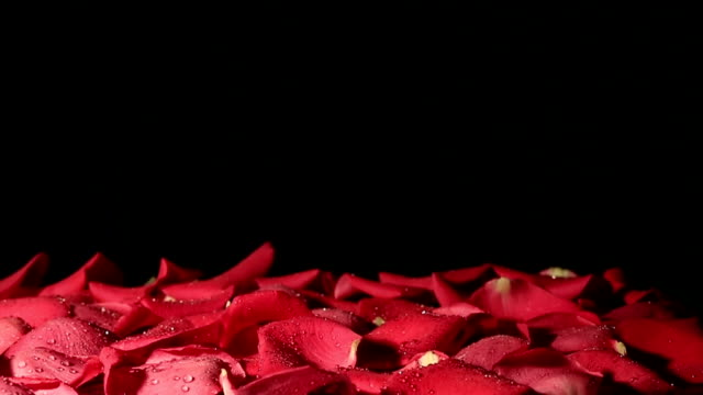 Drops of water falling on background of petals. Slow motion video
