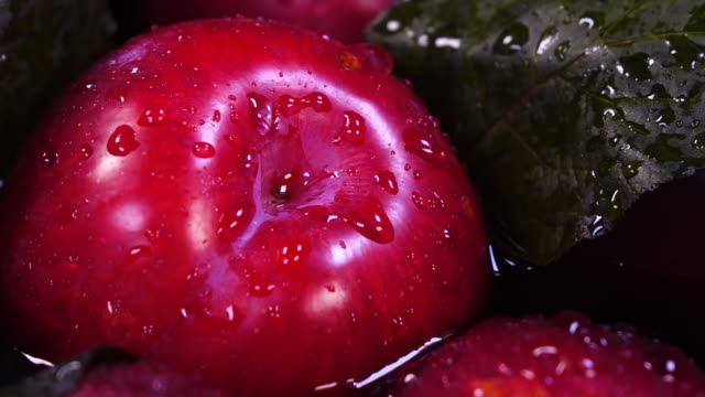 Drops of water falling on ripe organic plum in extreme slow motion. Shooting with high-speed camera. plum stock videos & royalty-free footage