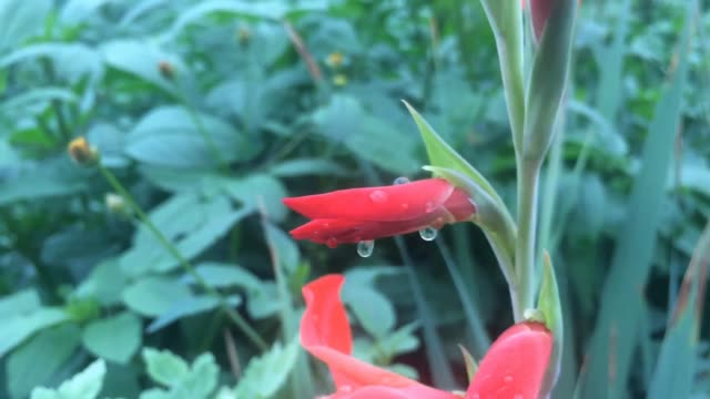 Drops of water on the flower