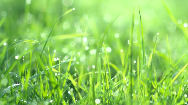 drops of water on the grass. morning dew. blurred background - lama oggetto creato dall'uomo video stock e b–roll