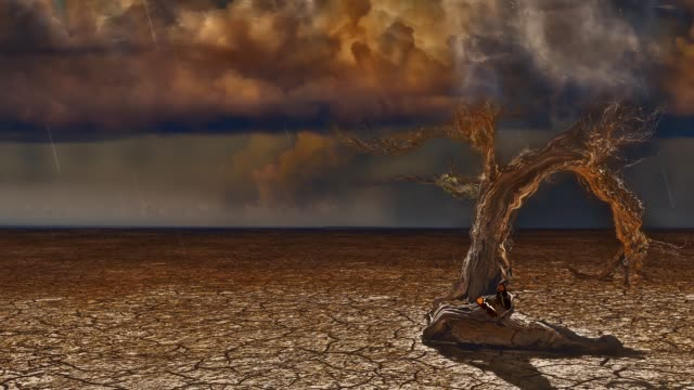 Drought land. Old Tree