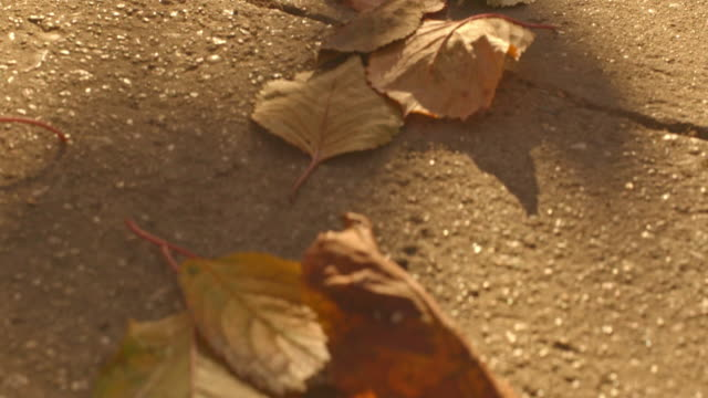 Dry autumn leaves on the ground video