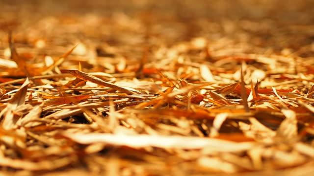 ドライ竹の葉、ドリー撮影 - 笹点の映像素材/bロール