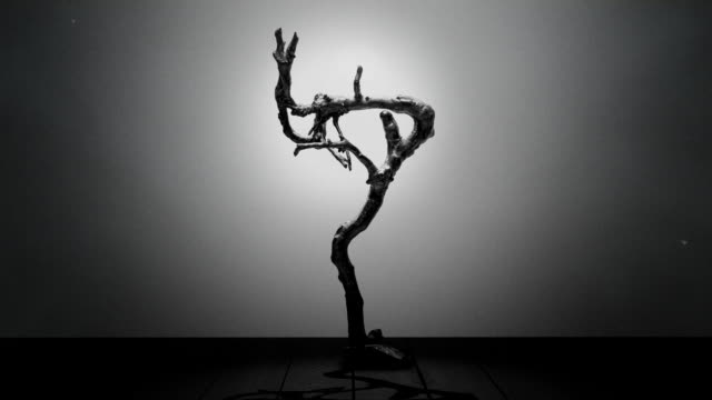 Dry branch