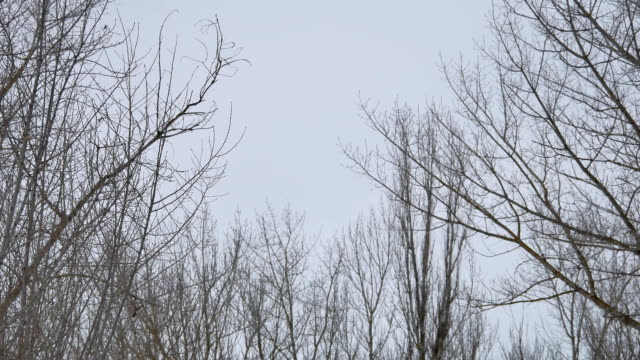 dry branches of trees tops winter forest in Russia the nature landscape outdoors - vídeo