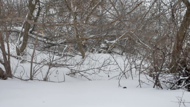 dry branches of trees tops winter forest in Russia the nature outdoors landscape - vídeo