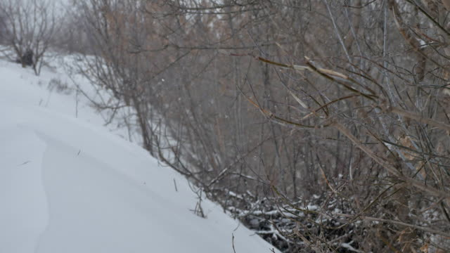 dry branches there is heavy snow in the snow of trees winter a forest in Russia outdoors the nature landscape tree - vídeo
