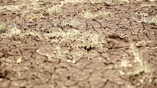 Dry cracked soil in a desert video