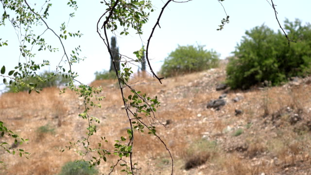 Dry Field and Path Behind Hanging Branch video