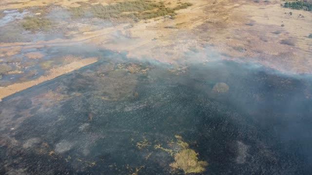 torrt gräs brinner på fältet. flygfoto över rökning vild eld. stora rökmoln och eld spred sig. avskogning på gräsmark och klimatförändringar - skog brand bildbanksvideor och videomaterial från bakom kulisserna