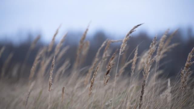 trockenes gras windet sich an einem bewölkten herbsttag im wind - baumgruppe stock-videos und b-roll-filmmaterial