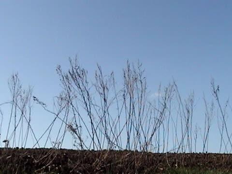 erba secca  - parte della pianta video stock e b–roll