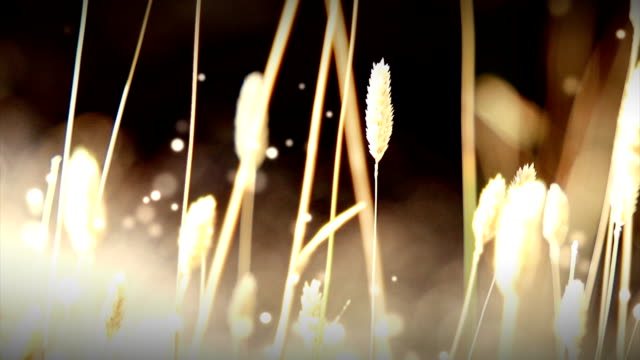 Dry Grass with Particles Loop (HD) video
