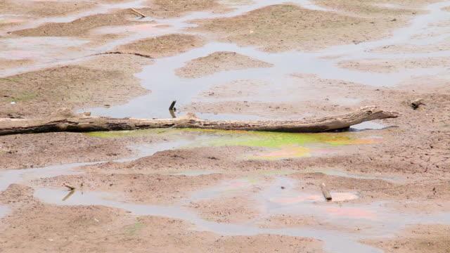 乾燥湖ベッド - 乾燥点の映像素材/bロール