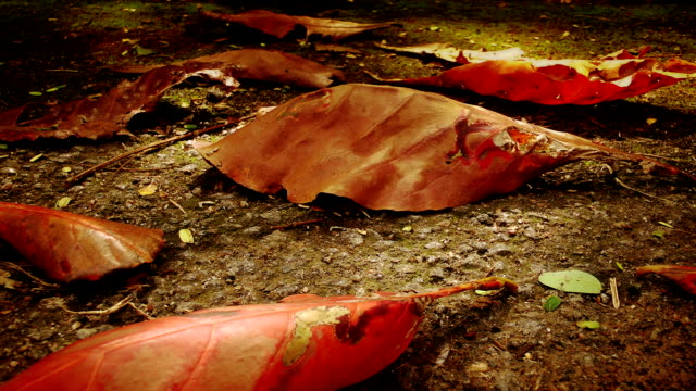 Dry leaf Autumn. Ground is covered by dry leaves. Ants are crawling. Slow camera motion to the left. saturated color stock videos & royalty-free footage