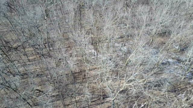 dry leafless treetops - albero spoglio video stock e b–roll