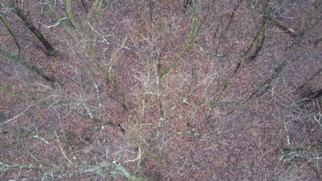 Dry Leafless Treetops video