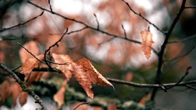 trockene blätter auf zweigen im winter und bei bewölktem himmel. - laub winter stock-videos und b-roll-filmmaterial