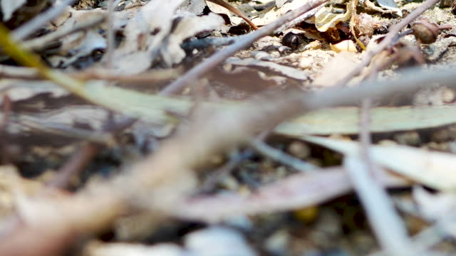 Dry leaves on the ground Dry leaves on the ground plant part stock videos & royalty-free footage