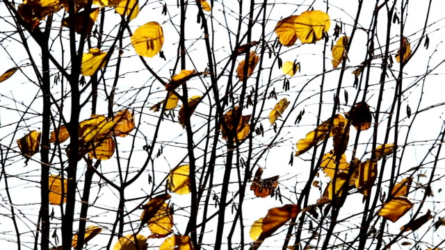 Dry leaves on the wind,autumn season. video