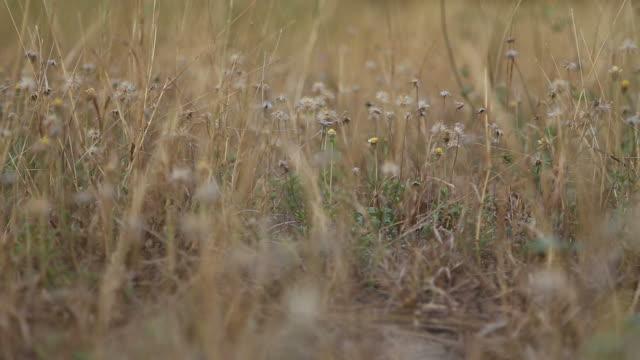 piccoli fiori di erba secca - bassino video stock e b–roll