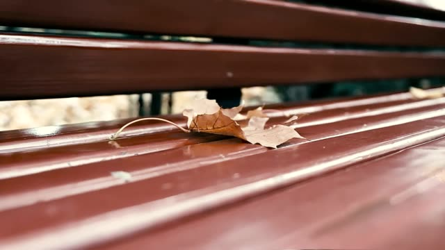dry maple leaf on a bench, autumn. - садовая скамья стоковые видео и кадры b-roll