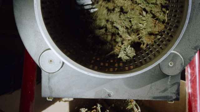 Dry Marijuana (Cannabis) Buds Rotate inside a Trimming Machine while the Leaves Drop out of the Bottom in an Indoor Processing Facility (Hemp)