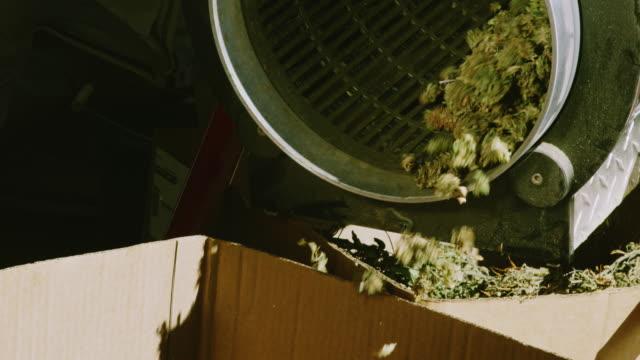 torr marijuana (cannabis) knoppar rotera inuti och falla ur en trimning smaskin i en kartong i en inomhusbearbetning facility (hampa) - hasch bildbanksvideor och videomaterial från bakom kulisserna