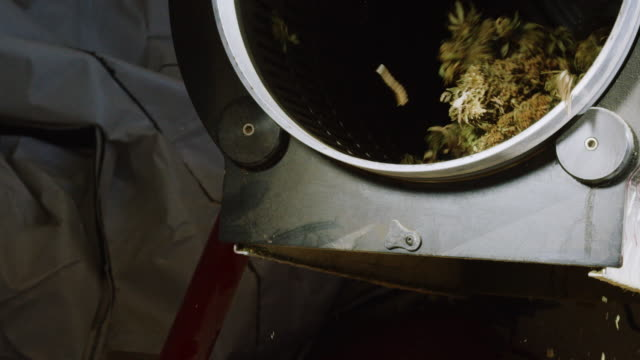 Dry Marijuana (Cannabis) Buds Rotate inside and Fall out of a Trimming Machine in an Indoor Processing Facility (Hemp)