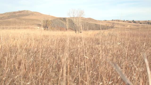 niedrigen winkel: trockenes steppengras im trockenen grasland während dürre im heißen sommer - afrikanische steppe dürre stock-videos und b-roll-filmmaterial