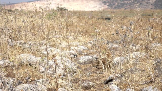 Dry Rocky Field Where Roman Road Was in Israel video
