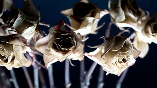torra rosebud - white roses bildbanksvideor och videomaterial från bakom kulisserna