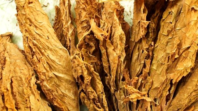 foglie di tabacco secco primo-up di virginia tabacco - sigaro video stock e b–roll