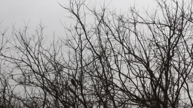 stockvideo's en b-roll-footage met droge boom in het bos - plantdeel