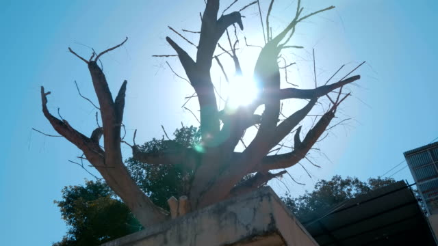 dry tree on the shore of the sacred lake pushkar in the city of pushkar, india - ghat filmów i materiałów b-roll