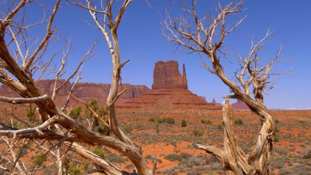 Dry trees at Monument Valley in Utah