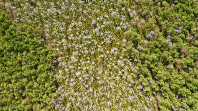 夏のシベリアの混合森林の乾燥木。 - シベリア点の映像素材/bロール