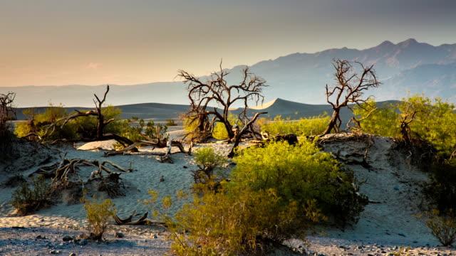 vídeos de stock e filmes b-roll de árvores no deserto seco - parque nacional do vale da morte