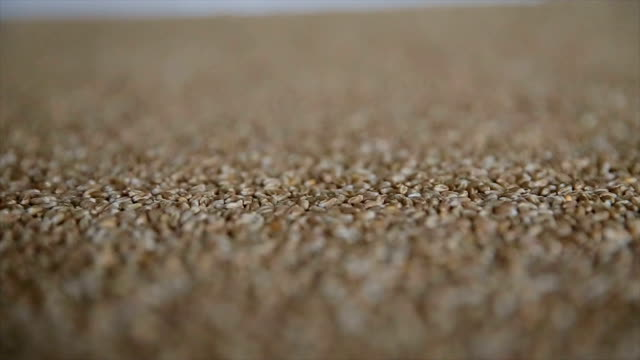Dry wheat grains background, close up loopable view. Food background. Gastronomy concept, organic food. Dry wheat cereal seeds Dry wheat grains background, close up loopable view. Food background. Gastronomy concept, organic food. Dry wheat cereal seeds. Slow motion rye grain stock videos & royalty-free footage