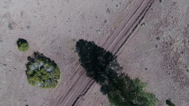 Dry wooded area aerial video