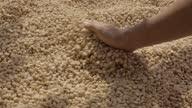 istock Drying Coffee Bean Slomo Spreading. 1307379656